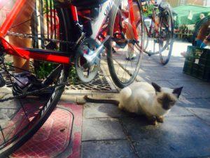 Lucainena con gato posando